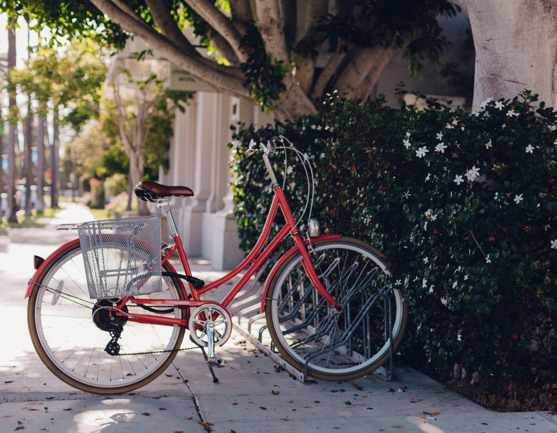 Scott kolesa