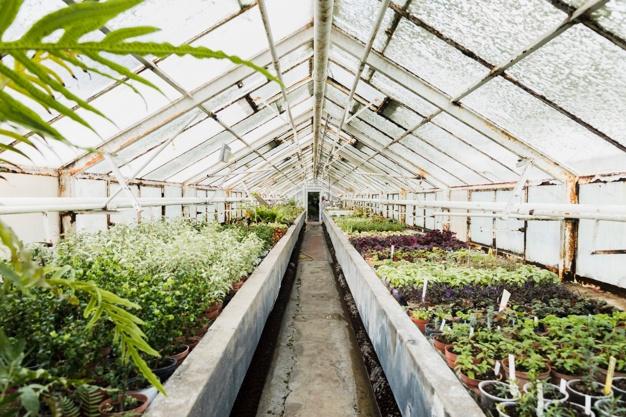 Topla greda omogoča, da rastline lahko prezimijo